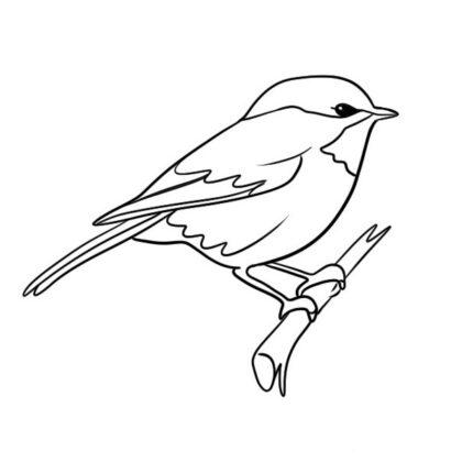 Sparrow Coloring Book