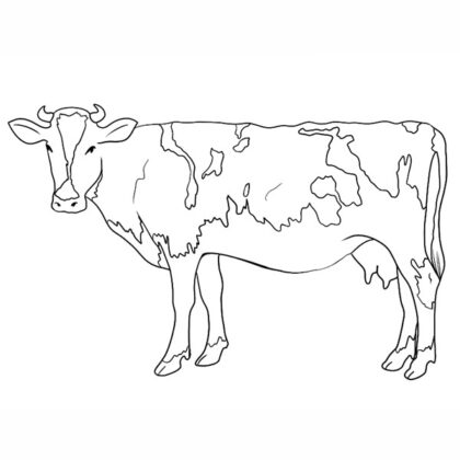 Cow Coloring Book