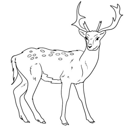 Deer Coloring Book