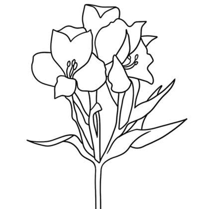 Alstroemeria Coloring Book