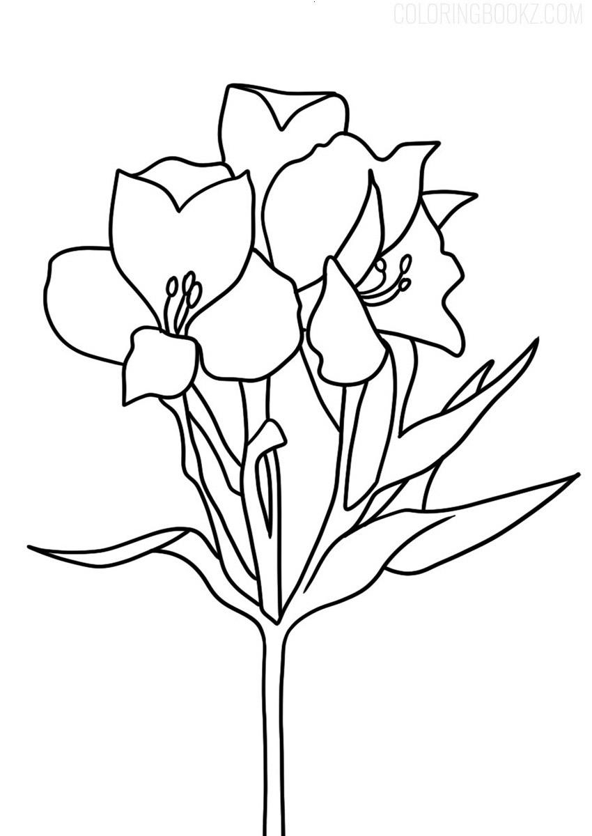 Alstroemeria Coloring Page